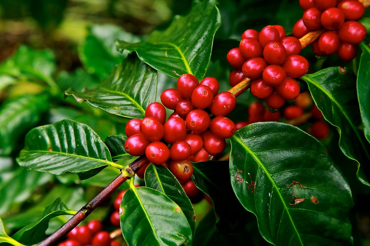 wholesale coffee supplier